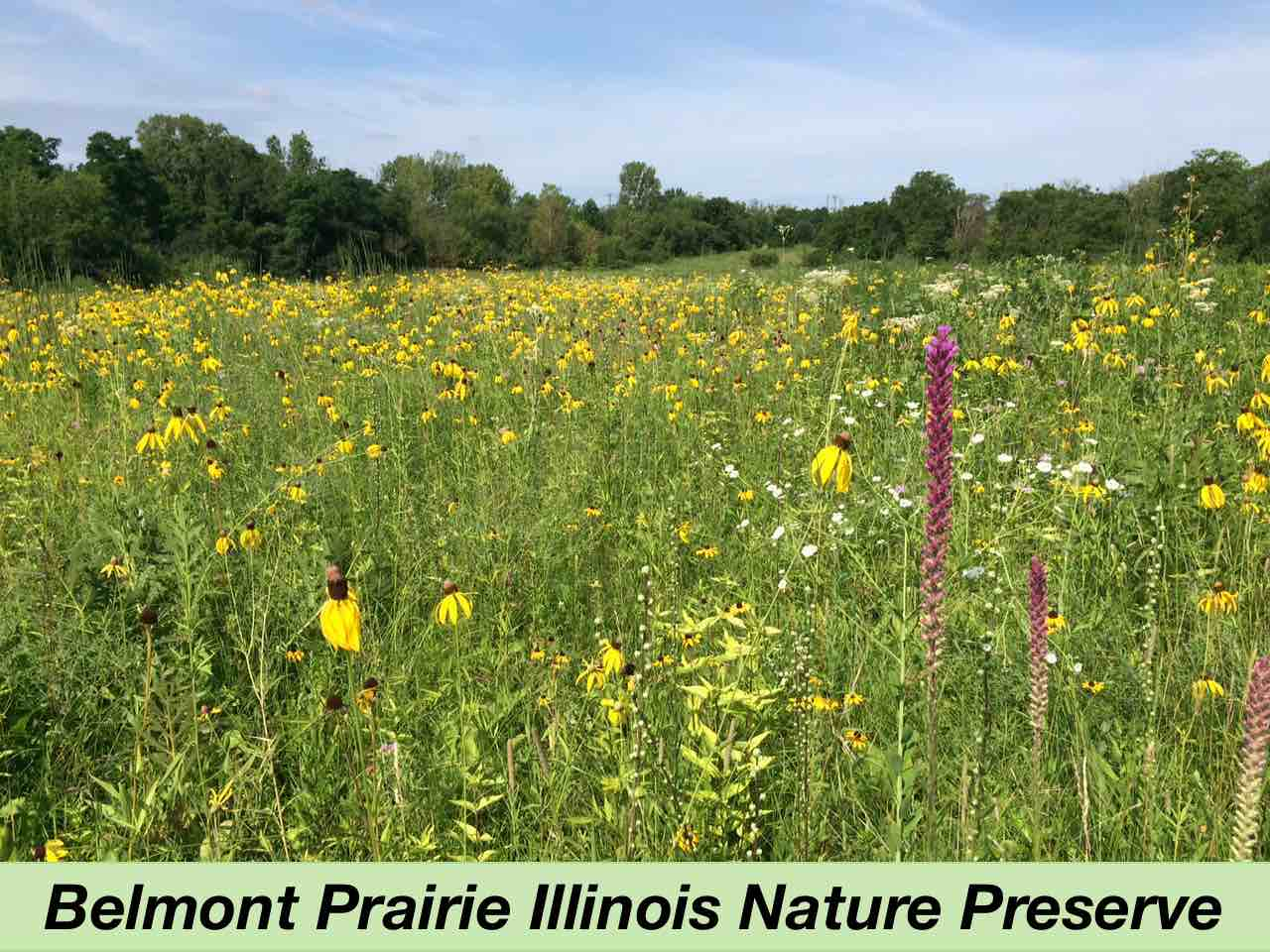 Prairie in July