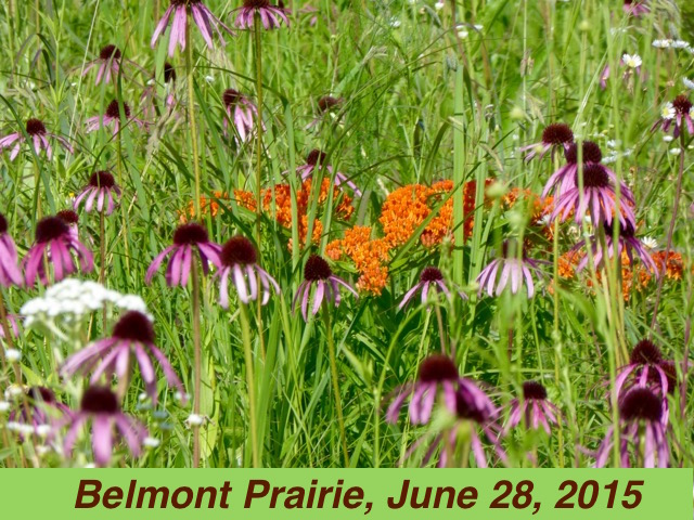 Prairie in June